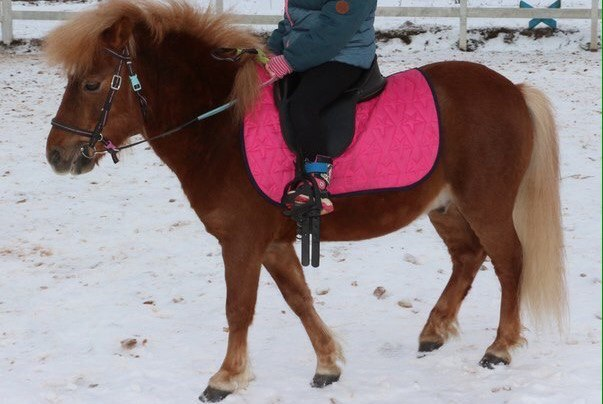 Всех граждан Петербурга просят посодействовать впоиске пони ивороны
