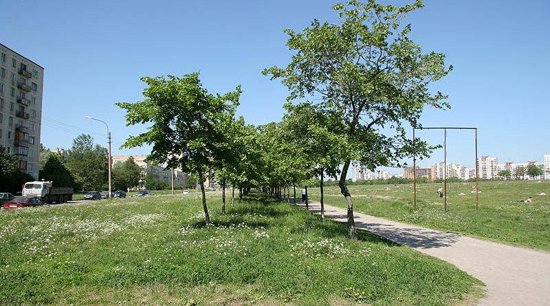 Фото Дениса Шаляпина с сайта www.kupsilla.ru