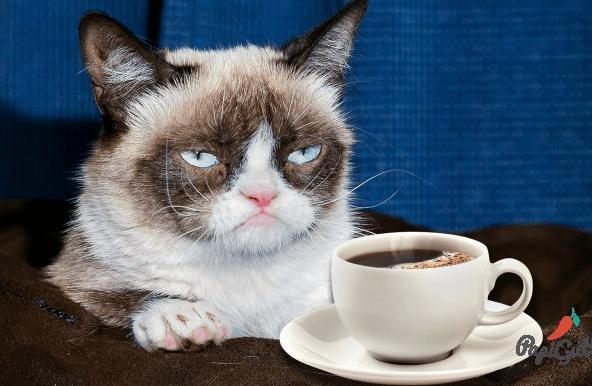 кошак с кофе