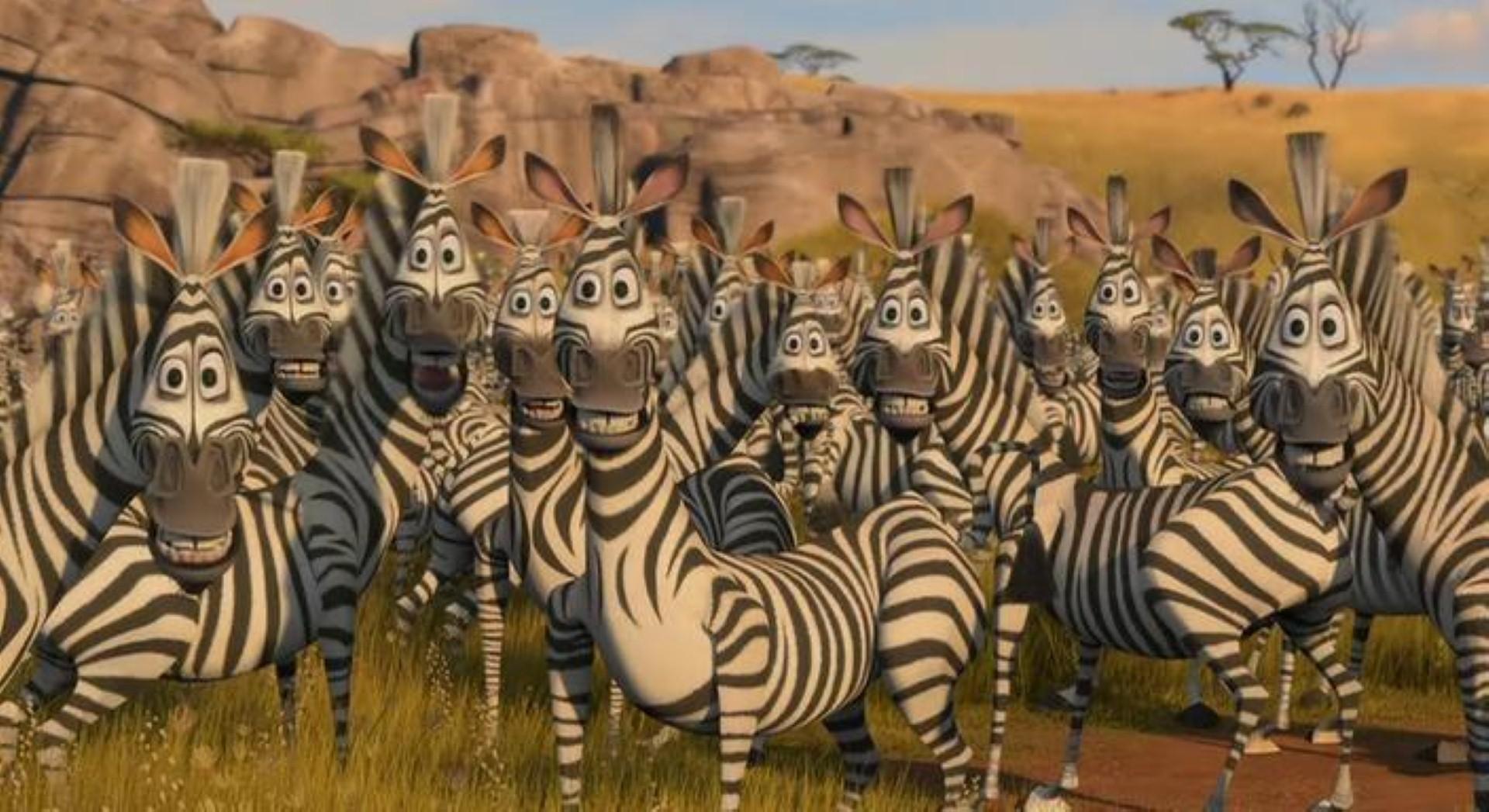 zebra1 (Large)