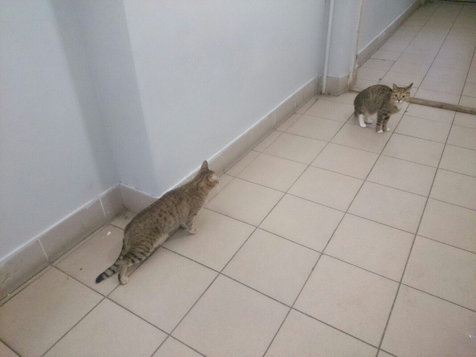 ВПетербурге измногоэтажки выбросили 2-х  котов вмешке